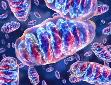 Mitochondrial biology in reproduction